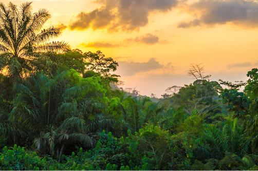 le-togo-veut-planter-un-milliard-d-arbres-au-cours-des-10-prochaines-annees