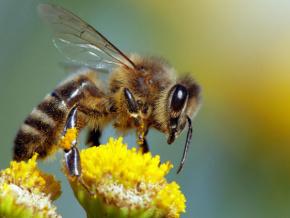 le-mifa-et-le-groupe-americain-koster-keunen-s-associent-pour-la-professionnalisation-de-l-apiculture