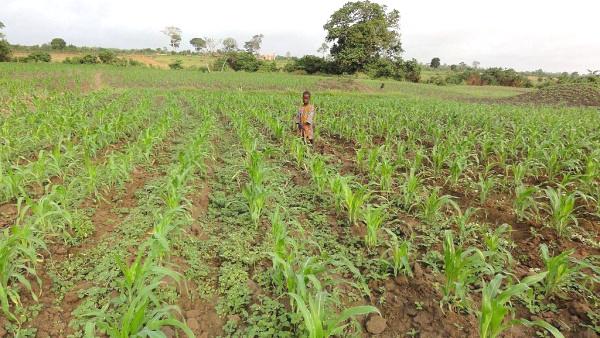 des-projets-d-envergure-attendus-dans-le-secteur-agricole-au-cours-du-nouveau-mandat-presidentiel