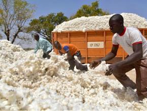 les-exportations-agricoles-ont-genere-110-milliards-fcfa-de-recettes-en-2019