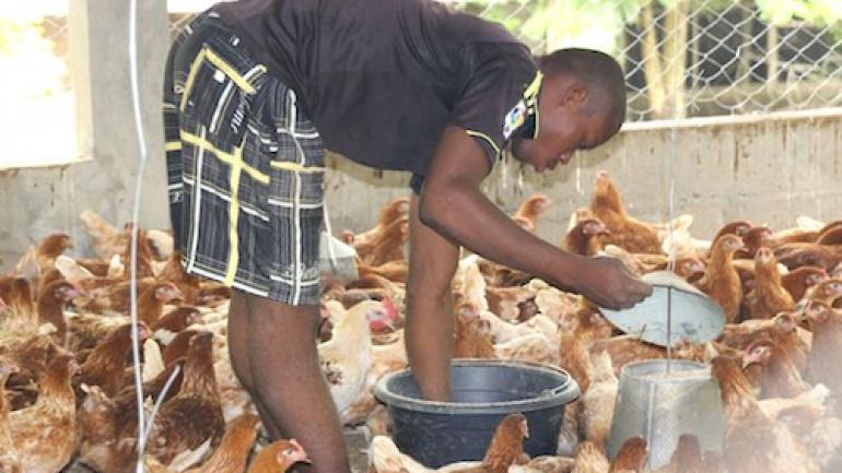 en-10-ans-les-eleveurs-togolais-ont-ameliore-leurs-revenus-de-50-grace-au-pasa