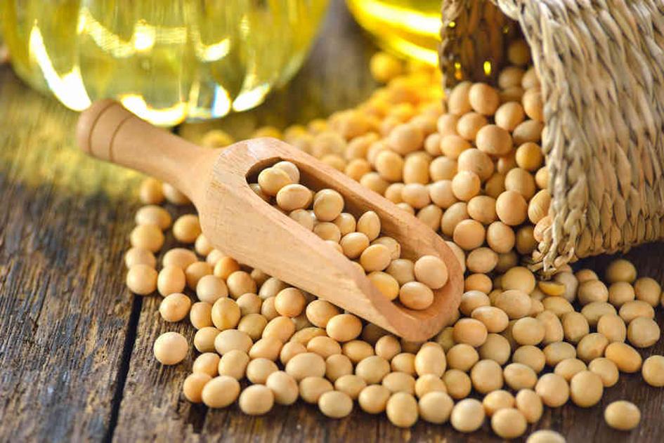 l-itra-fournira-des-varietes-ameliorees-de-soja-a-la-pia