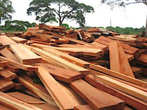 le-togo-se-prepare-a-accueillir-les-acteurs-mondiaux-du-secteur-des-bois-tropicaux