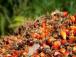 liberia-la-banque-mondiale-debloque-25-millions-en-faveur-de-l-agriculture