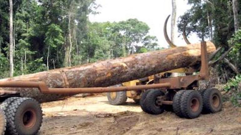vers-l-adoption-d-un-guide-juridique-en-matiere-d-infractions-forestieres