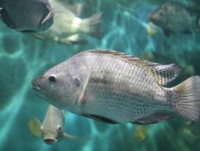 l-ifad-d-elavagnon-dedie-a-l-aquaculture-ouvrira-ses-portes-le-mois-prochain