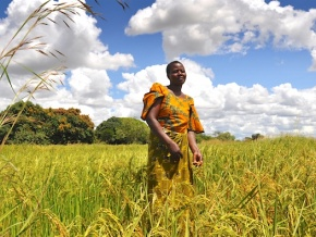 securite-alimentaire-le-togo-degage-un-excedent-sur-la-campagne-agricole-2017-2018-sur-fond-de-belles-perspectives