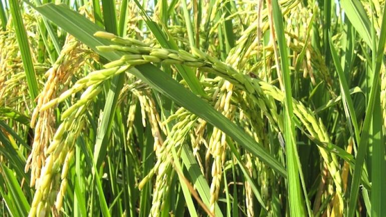 mecanisme-incitatif-de-financement-agricole-mifa-les-premiers-cheques-a-partir-de-ce-13-juillet