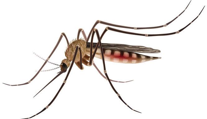 le-togo-recoit-un-appui-de-la-chine-dans-la-lutte-contre-le-paludisme