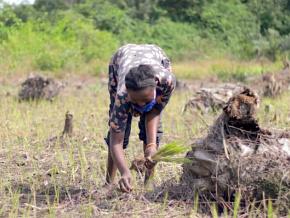 le-pnper-appuie-les-menages-vulnerables-en-semences