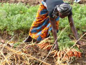 les-deputes-veulent-impliquer-davantage-les-femmes-dans-l-investissement-agricole