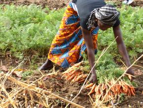 les-deputes-veulent-impliquer-davantage-les-femmes-dans-l-investissement-agricole