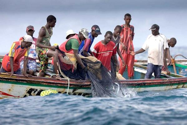 peche-37-000-tonnes-de-poissons-capturees-de-2018-a-2019