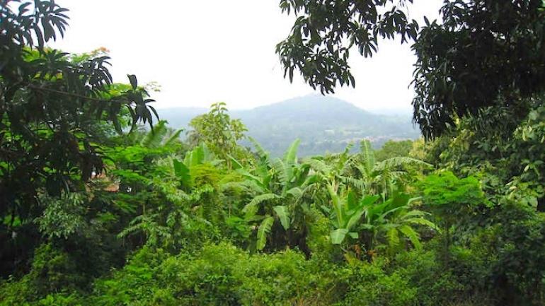 le-projet-redd-examine-deux-etudes-analytiques-en-vue-d-ameliorer-la-couverture-forestiere-au-togo