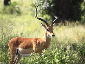 lancement-du-projet-menant-au-statut-de-reserve-de-biosphere-pour-le-parc-national-fazao-malfakassa