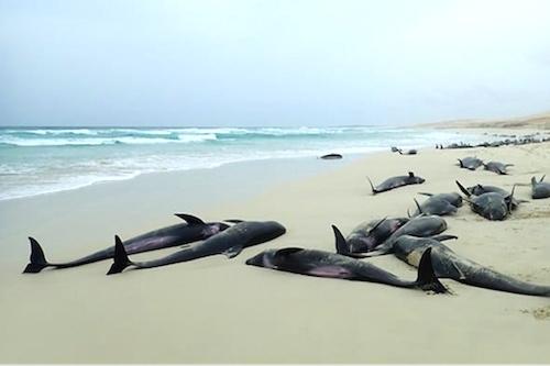 ne-consommez-pas-les-poissons-morts-echoues-sur-les-plages