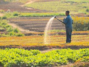 150-000-petits-agriculteurs-bientot-pourvus-en-intrants