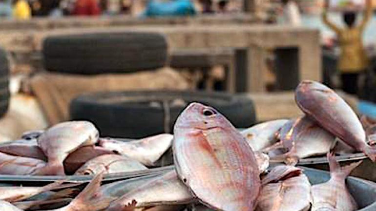 les-importateurs-de-produits-halieutiques-invites-a-regulariser-leurs-agrements-sanitaires