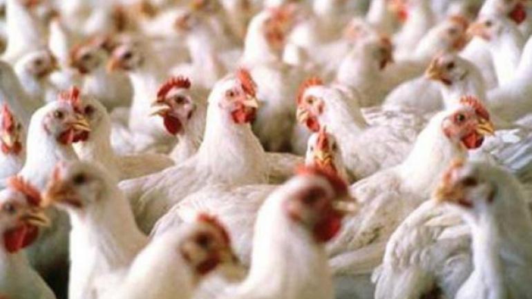 plus-aucune-importation-de-produits-avicoles-sans-autorisation-prealable